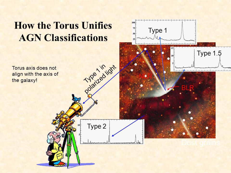 How the Torus Unifies AGN Classifications
