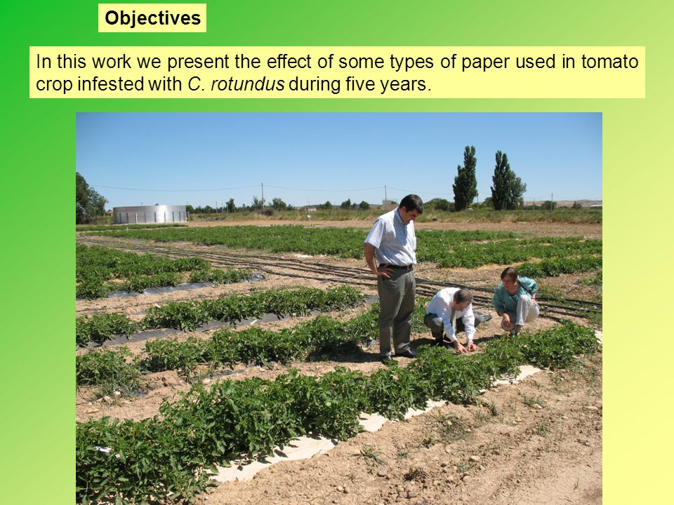 Objectives In this work we present the effect of some types of paper used in tomato crop infested with C.
