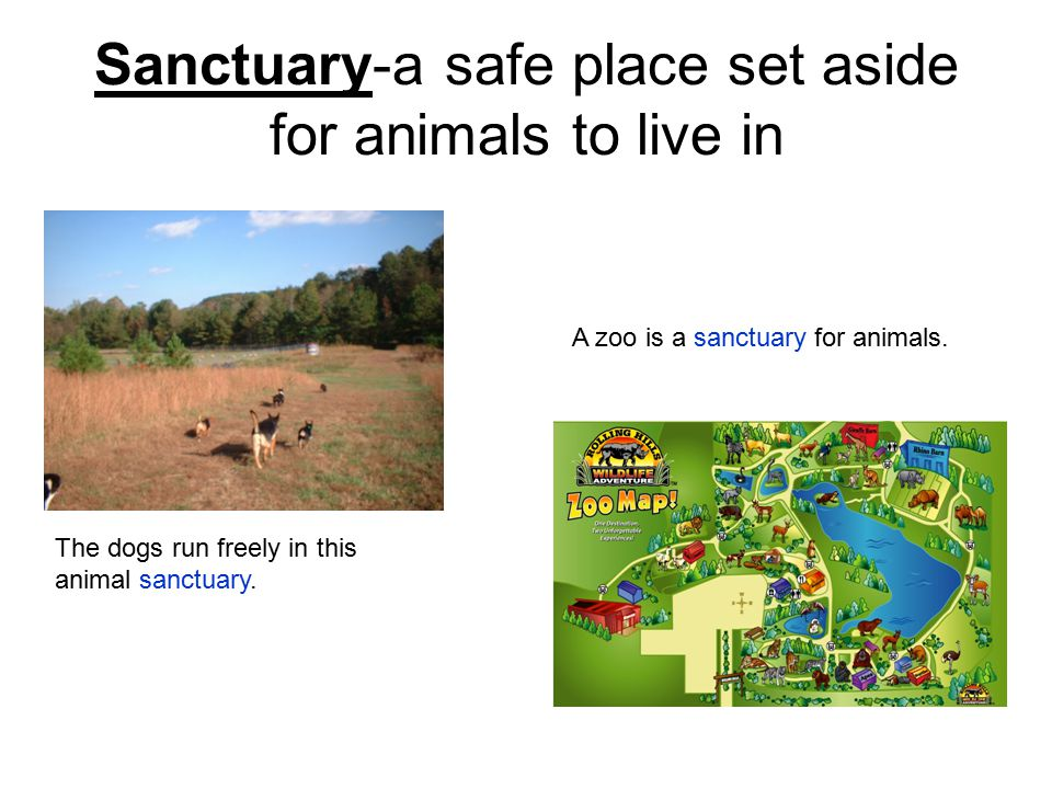 Sanctuary-a safe place set aside for animals to live in