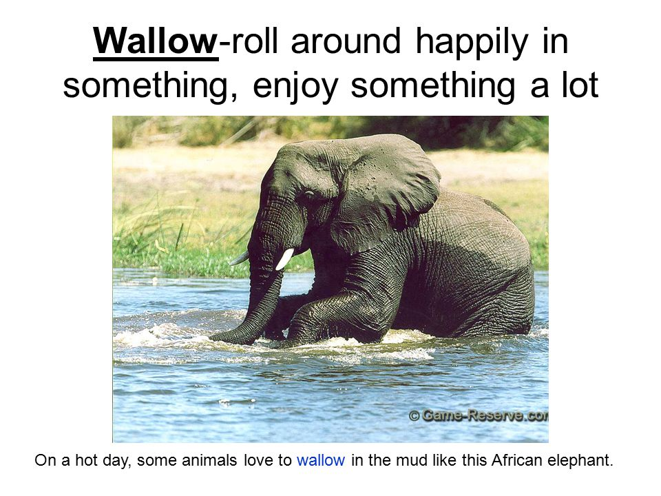 Wallow-roll around happily in something, enjoy something a lot