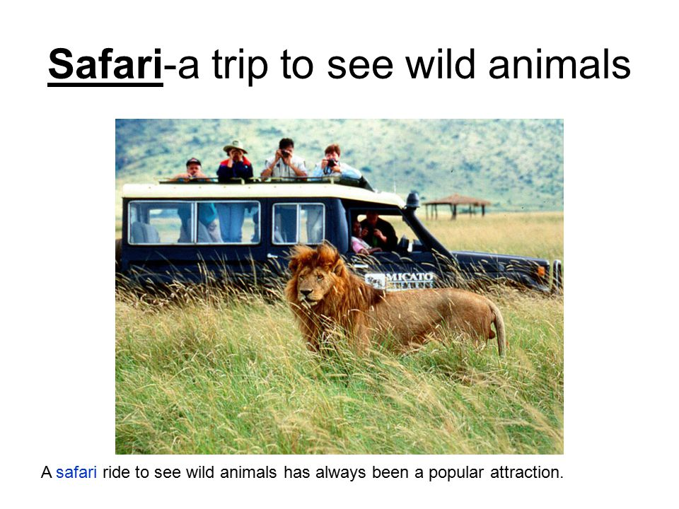 Safari-a trip to see wild animals