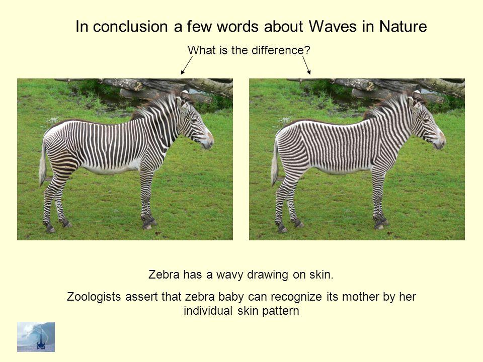 Zebra has a wavy drawing on skin.