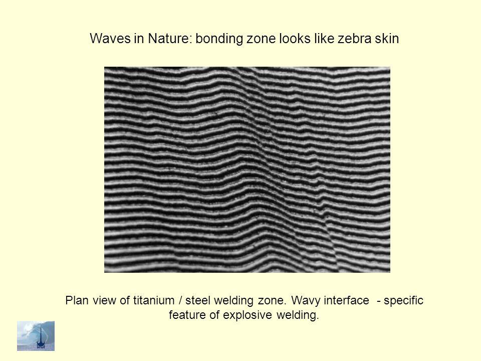 Waves in Nature: bonding zone looks like zebra skin