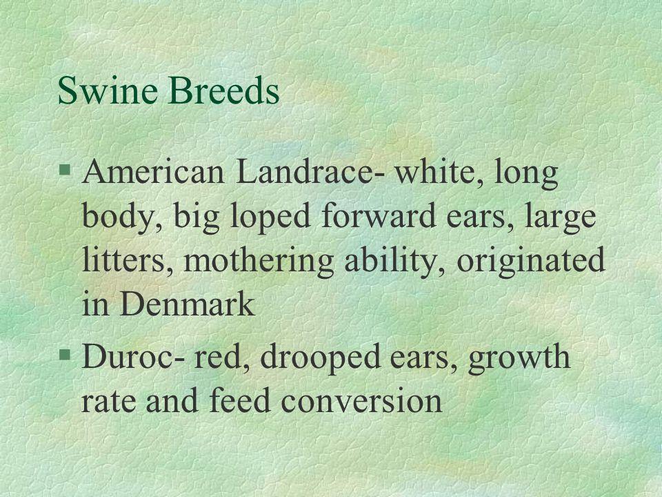 Swine Breeds American Landrace- white, long body, big loped forward ears, large litters, mothering ability, originated in Denmark.
