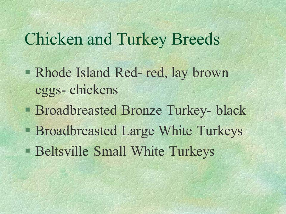 Chicken and Turkey Breeds