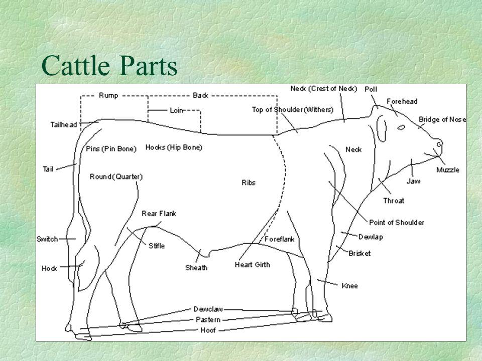 Cattle Parts