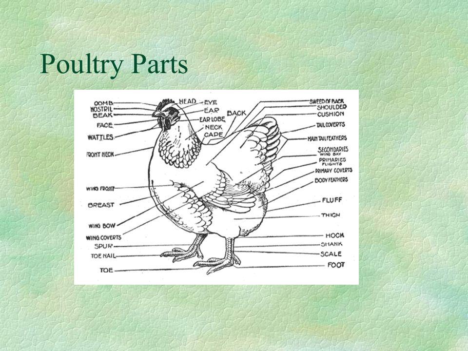 Poultry Parts