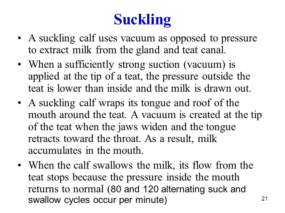 Suckling A suckling calf uses vacuum as opposed to pressure to extract milk from the gland and teat canal.