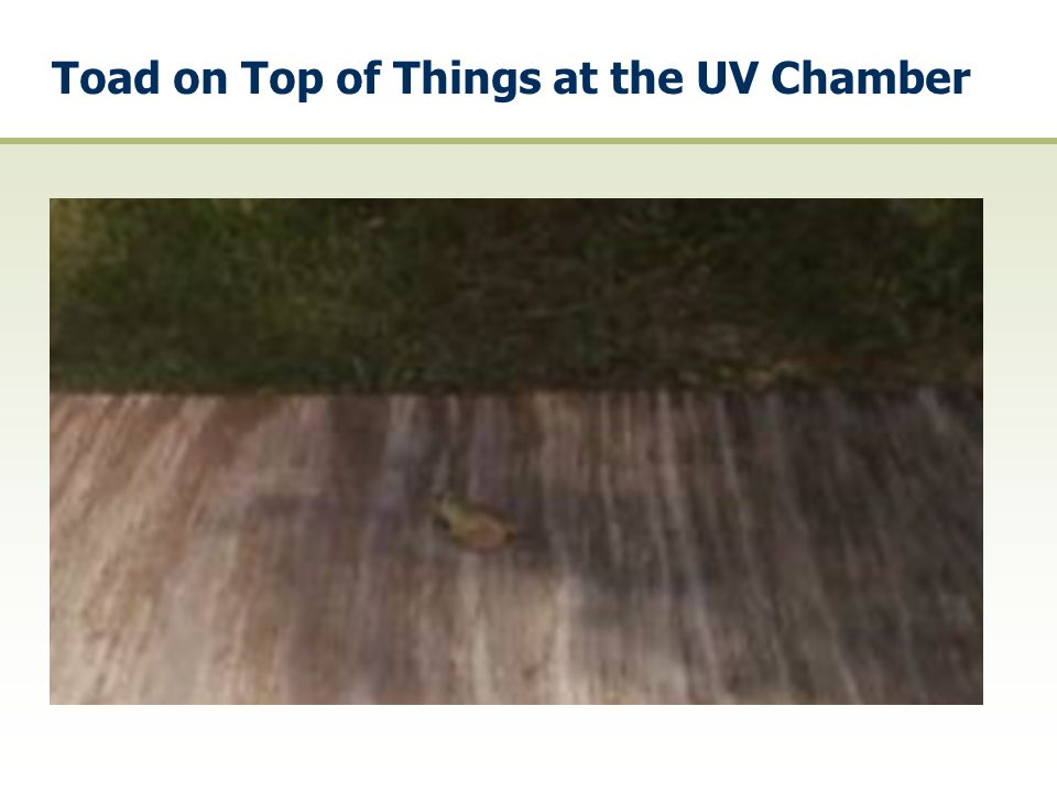 Toad on Top of Things at the UV Chamber