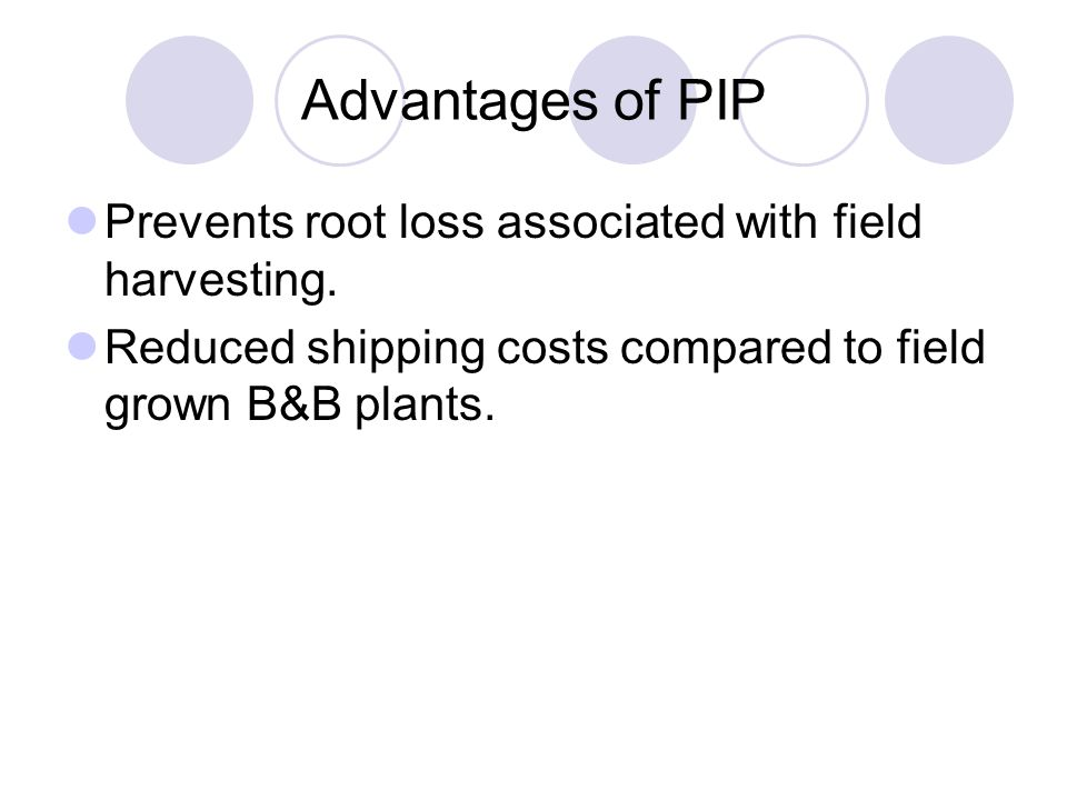 Advantages of PIP Prevents root loss associated with field harvesting.