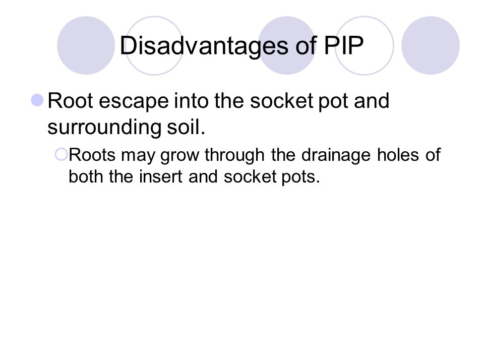 Disadvantages of PIP Root escape into the socket pot and surrounding soil.