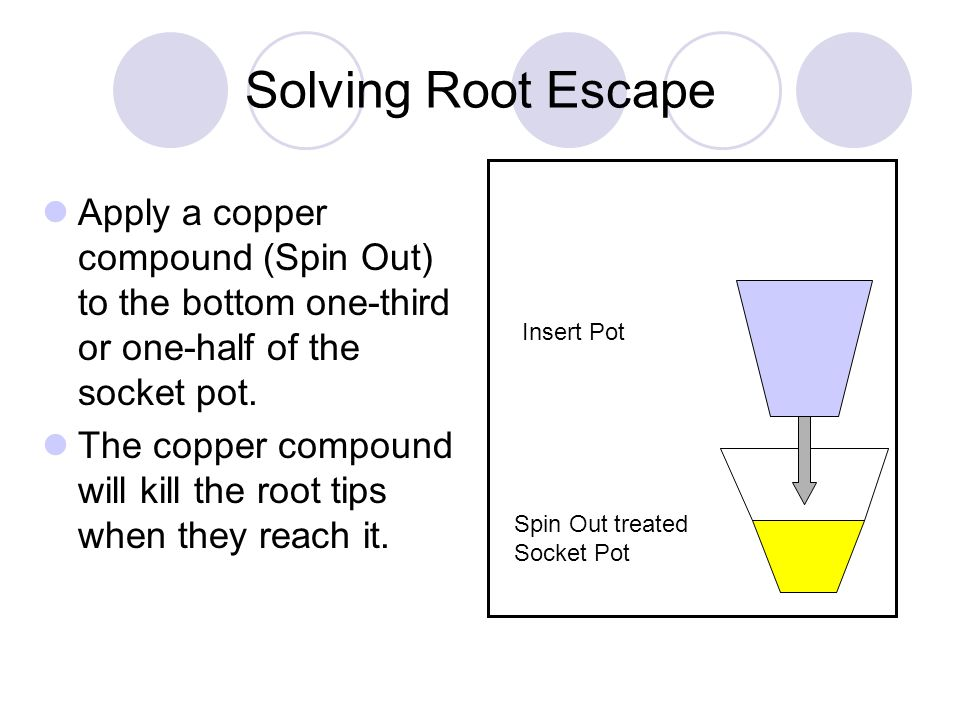 Solving Root Escape Insert Pot. Spin Out treated Socket Pot.