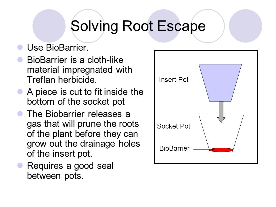Solving Root Escape Use BioBarrier.