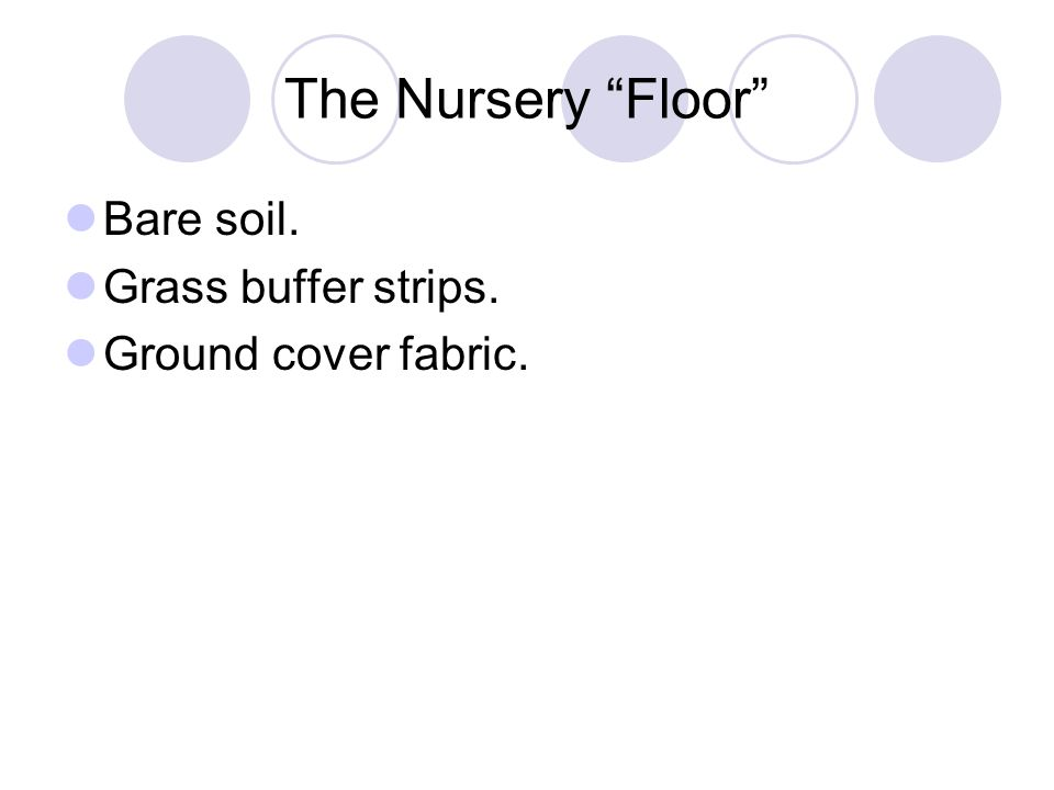 The Nursery Floor Bare soil. Grass buffer strips.