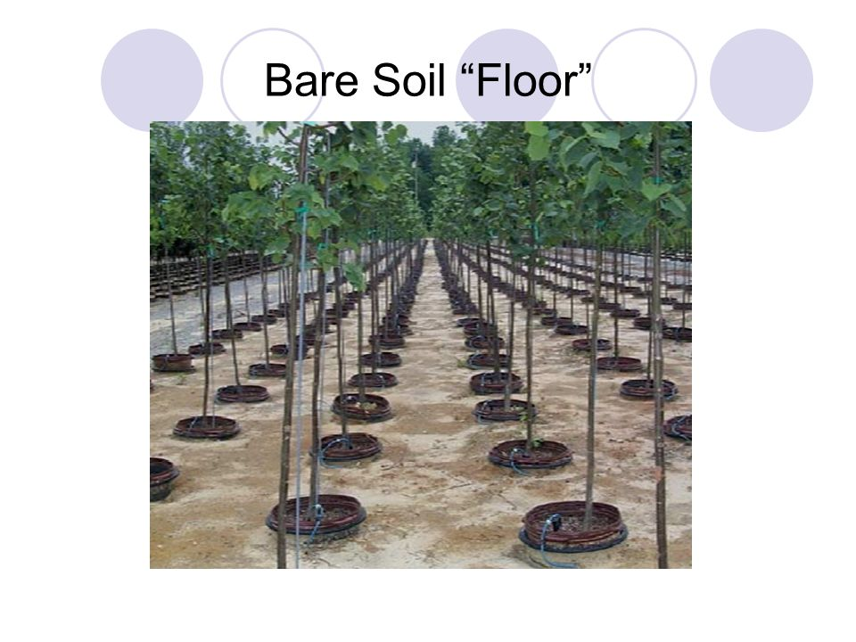 Bare Soil Floor