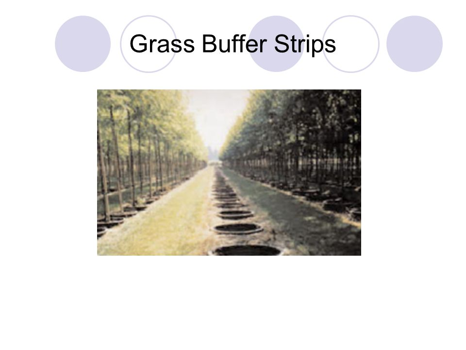 Grass Buffer Strips