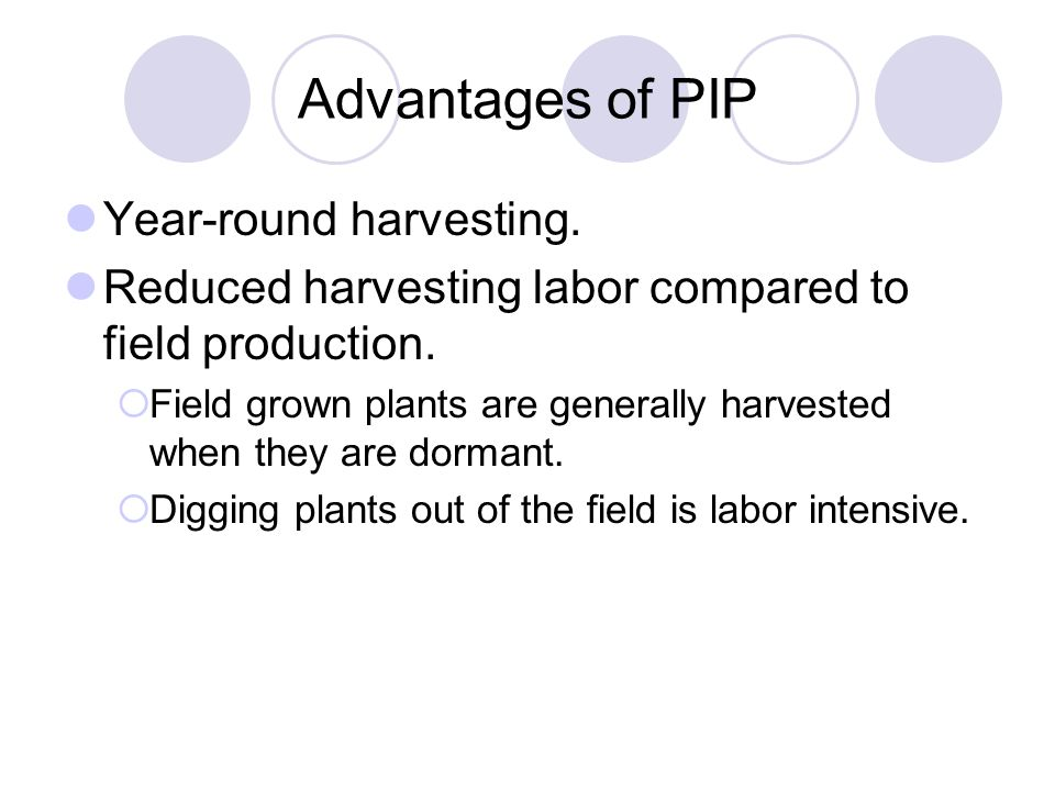 Advantages of PIP Year-round harvesting.