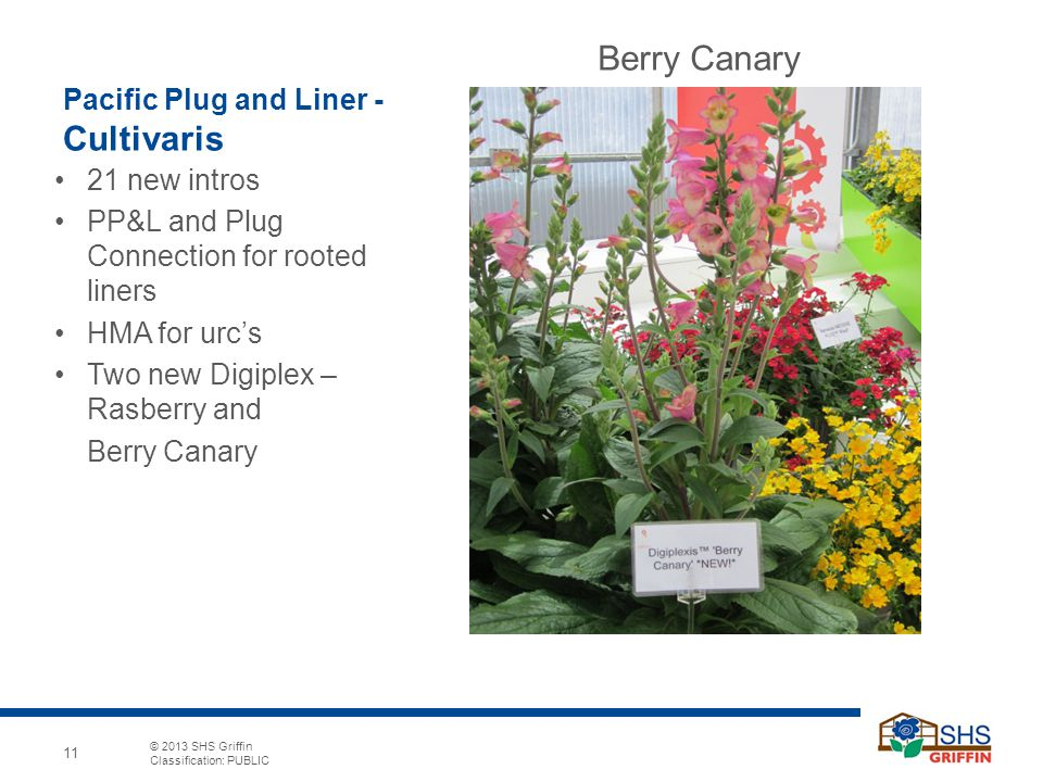 Pacific Plug and Liner - Cultivaris
