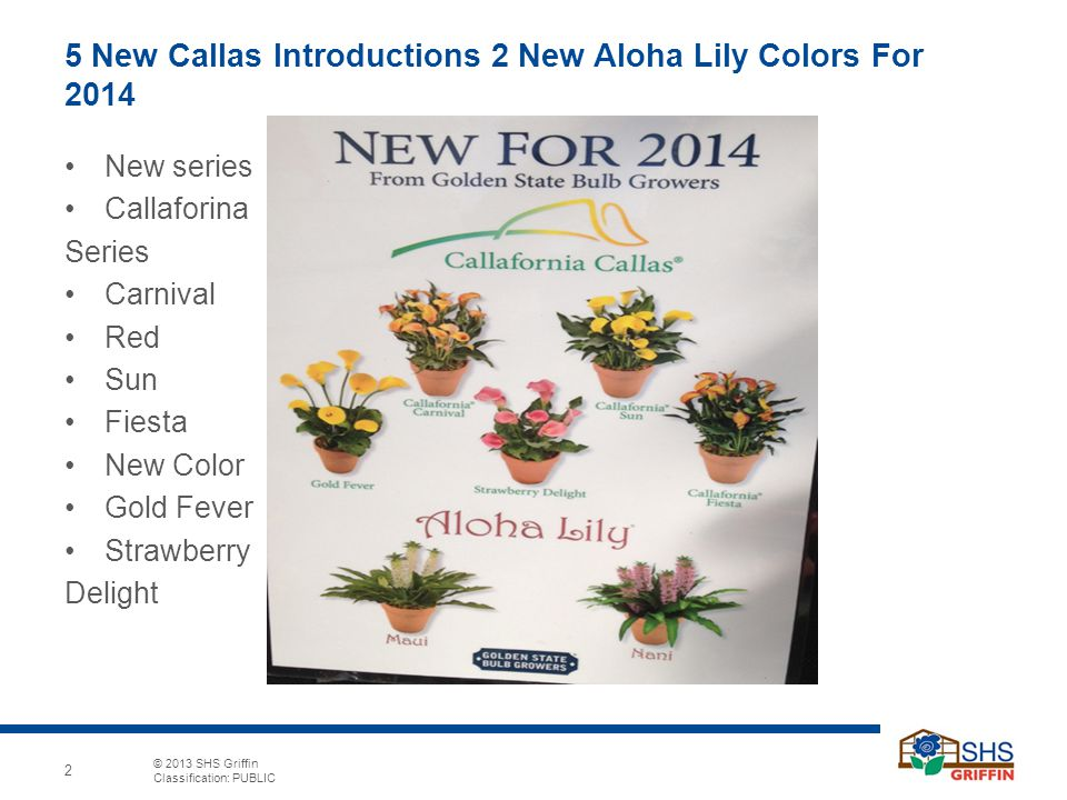 5 New Callas Introductions 2 New Aloha Lily Colors For 2014