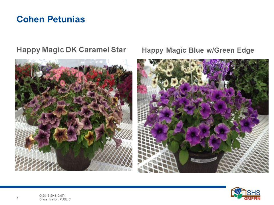 Cohen Petunias Happy Magic DK Caramel Star