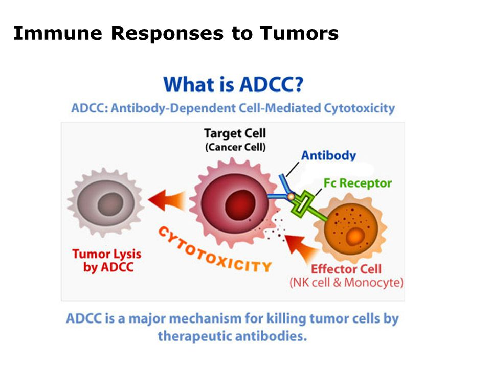 Immune Responses to Tumors