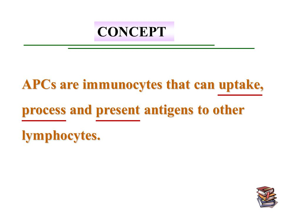 CONCEPT APCs are immunocytes that can uptake, process and present antigens to other lymphocytes.