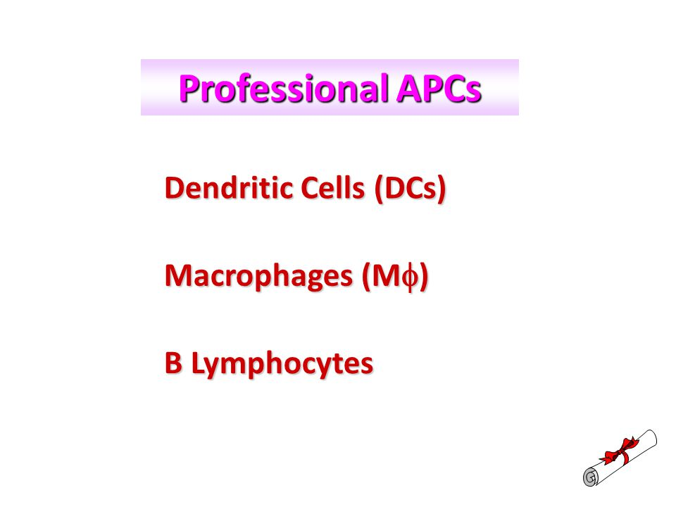 Professional APCs Dendritic Cells (DCs) Macrophages (M) B Lymphocytes
