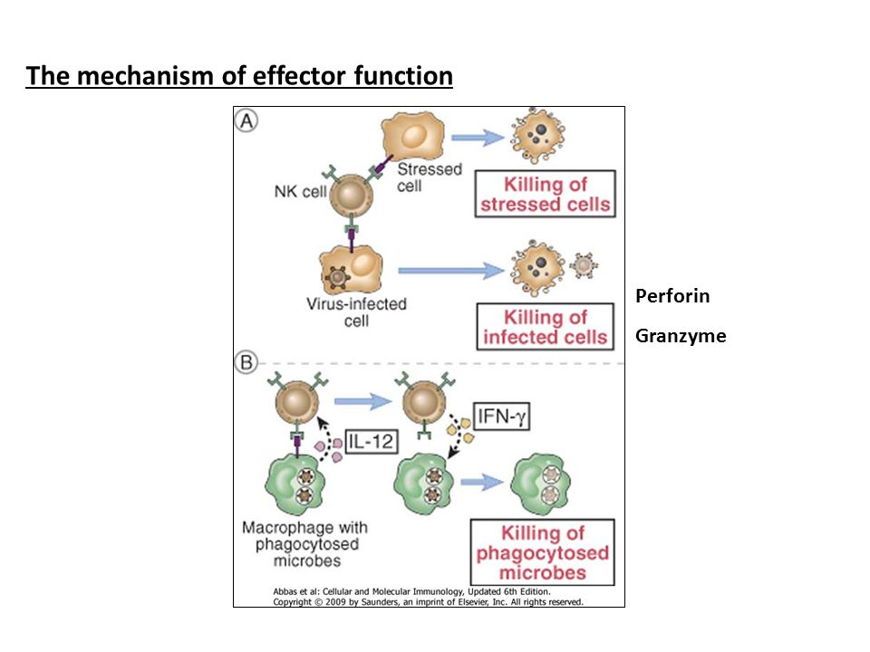 The mechanism of effector function