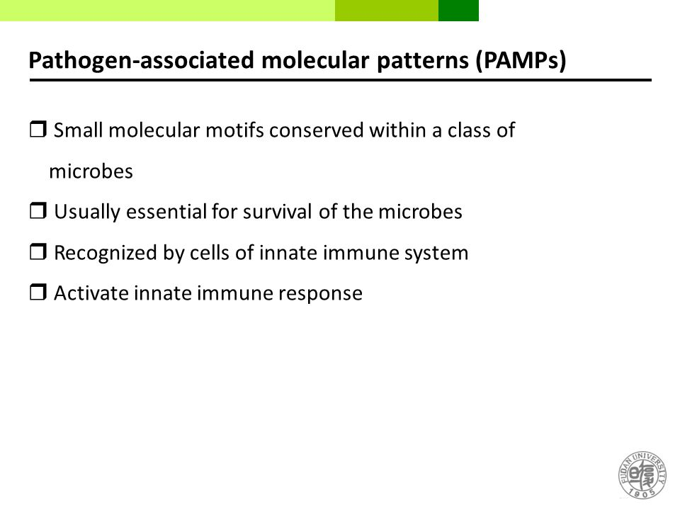 Pathogen-associated molecular patterns (PAMPs)