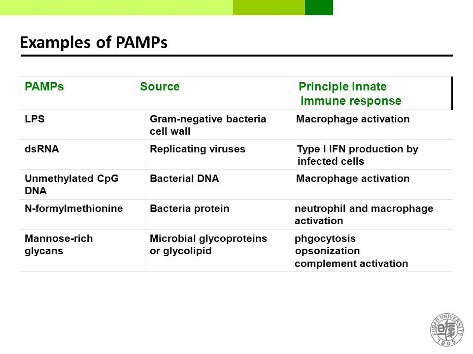 Examples of PAMPs PAMPs Source Principle innate immune response LPS