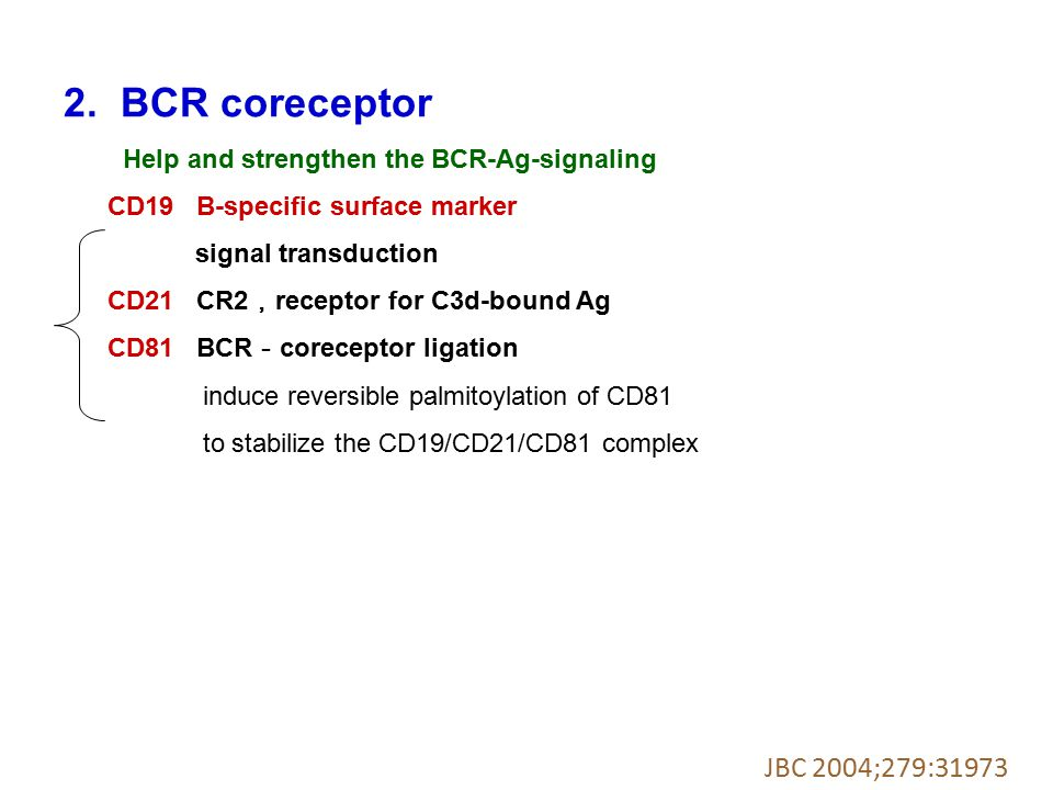 2. BCR coreceptor JBC 2004;279:31973 CD19 B-specific surface marker