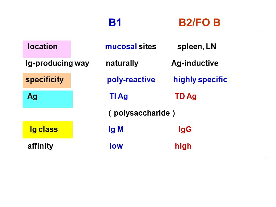 B1 B2/FO B location mucosal sites spleen, LN
