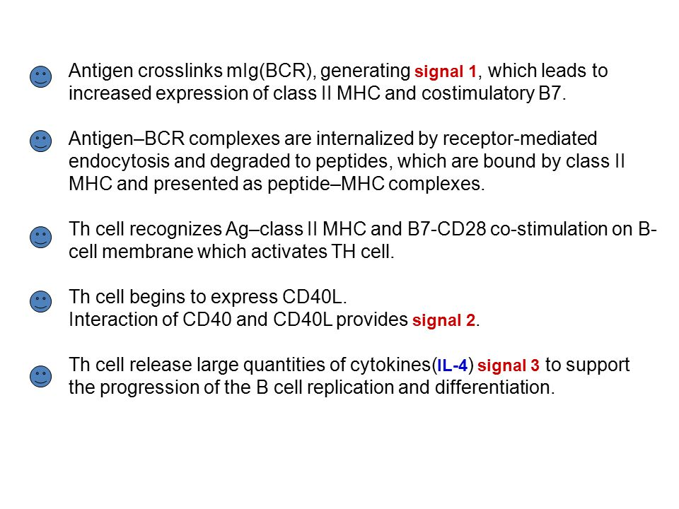 Antigen crosslinks mIg(BCR), generating signal 1, which leads to increased expression of class II MHC and costimulatory B7.