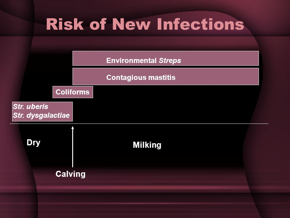 Risk of New Infections Dry Milking Calving Environmental Streps