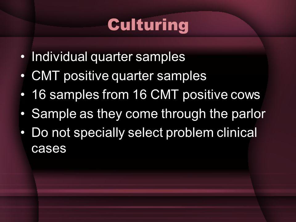Culturing Individual quarter samples CMT positive quarter samples
