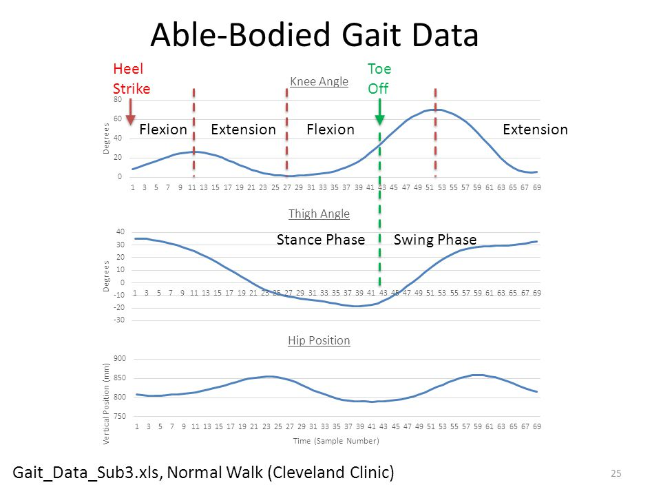 Able-Bodied Gait Data Heel Strike. Toe Off. Flexion.