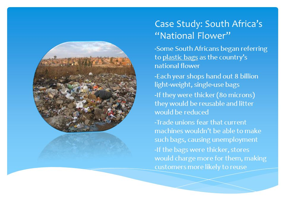 Case Study: South Africa's National Flower
