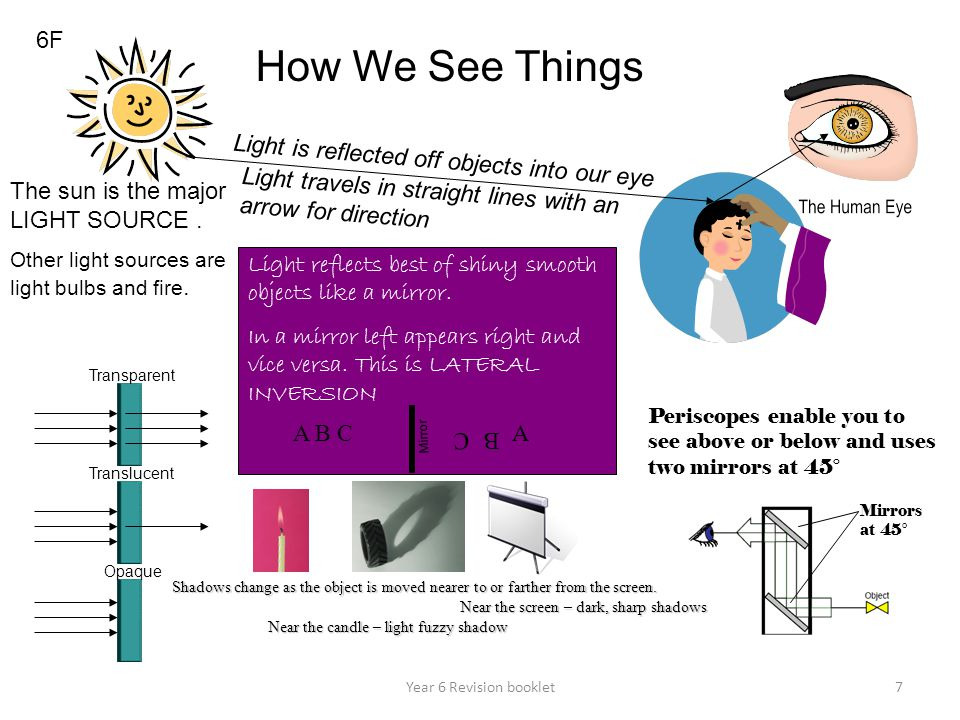 How We See Things 6F Light is reflected off objects into our eye