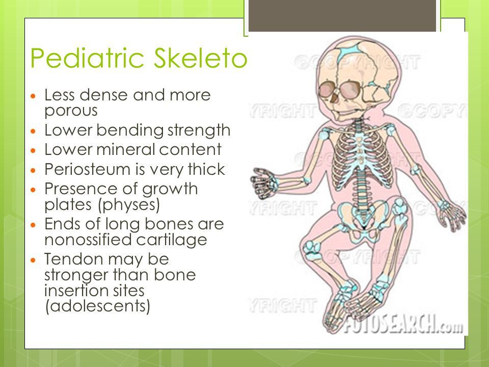 Pediatric Skeleton Less dense and more porous Lower bending strength