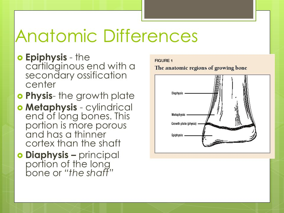 Anatomic Differences Epiphysis - the cartilaginous end with a secondary ossification center. Physis- the growth plate.