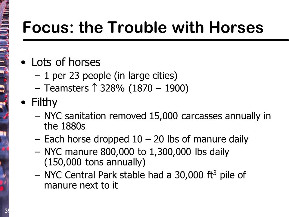 Focus: the Trouble with Horses