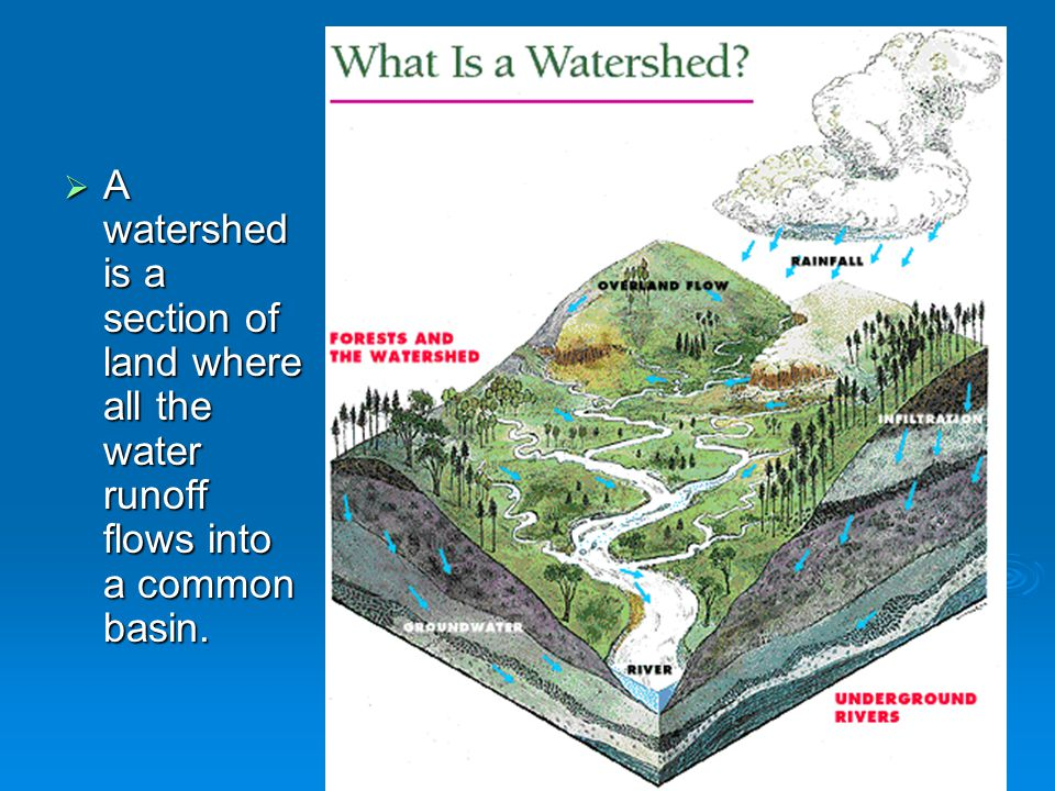 A watershed is a section of land where all the water runoff flows into a common basin.