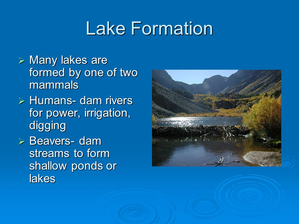 Lake Formation Many lakes are formed by one of two mammals