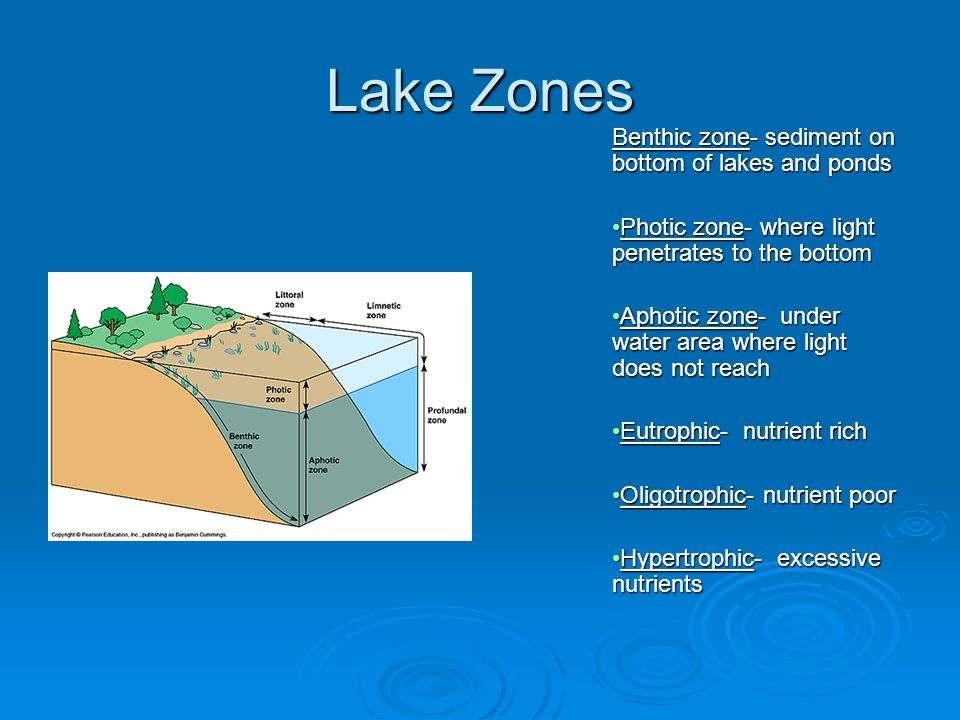 Lake Zones Benthic zone- sediment on bottom of lakes and ponds