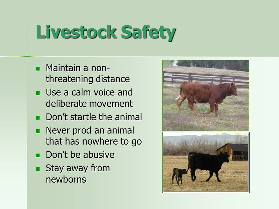Livestock Safety Maintain a non-threatening distance