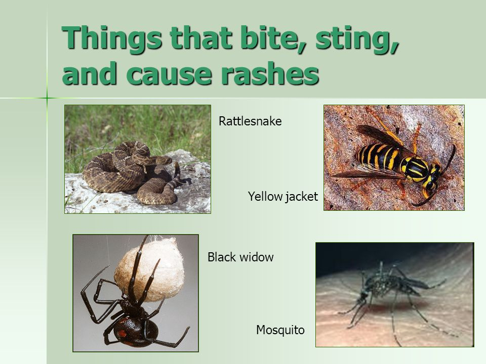 Things that bite, sting, and cause rashes
