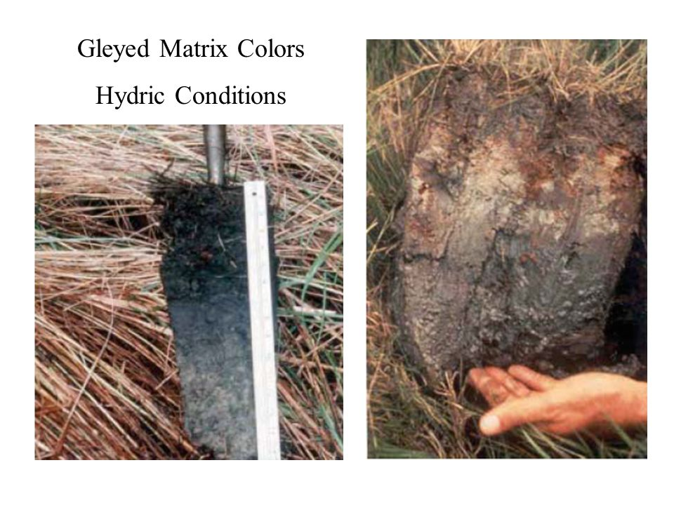Gleyed Matrix Colors Hydric Conditions