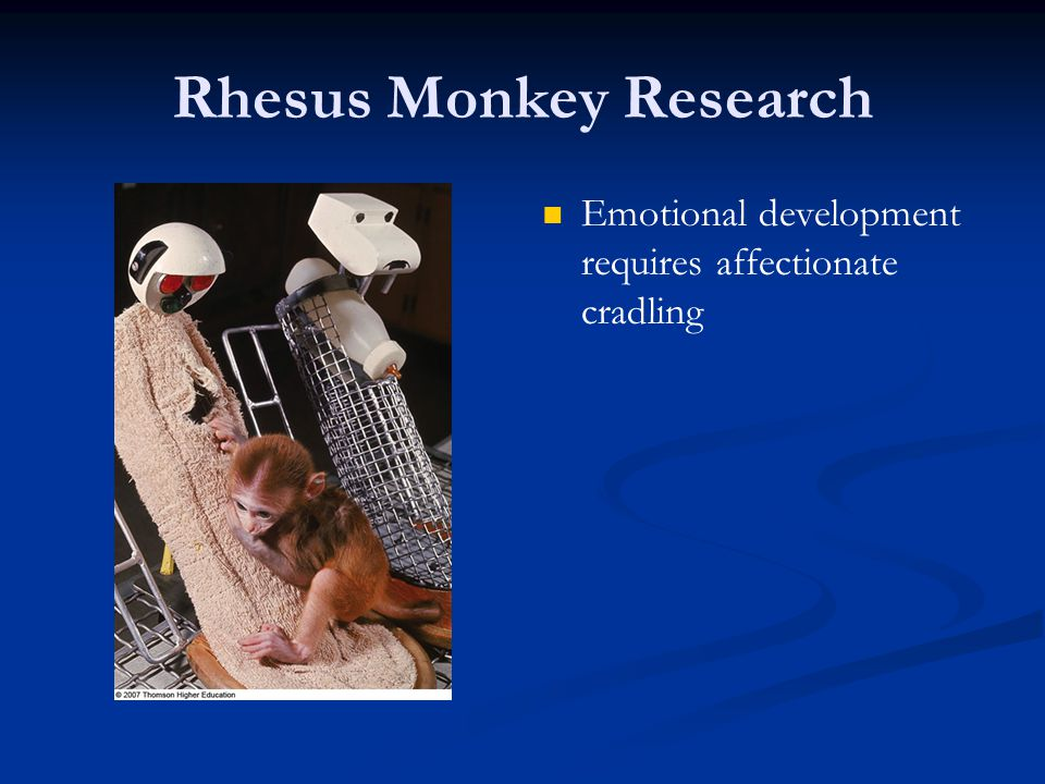 Rhesus Monkey Research