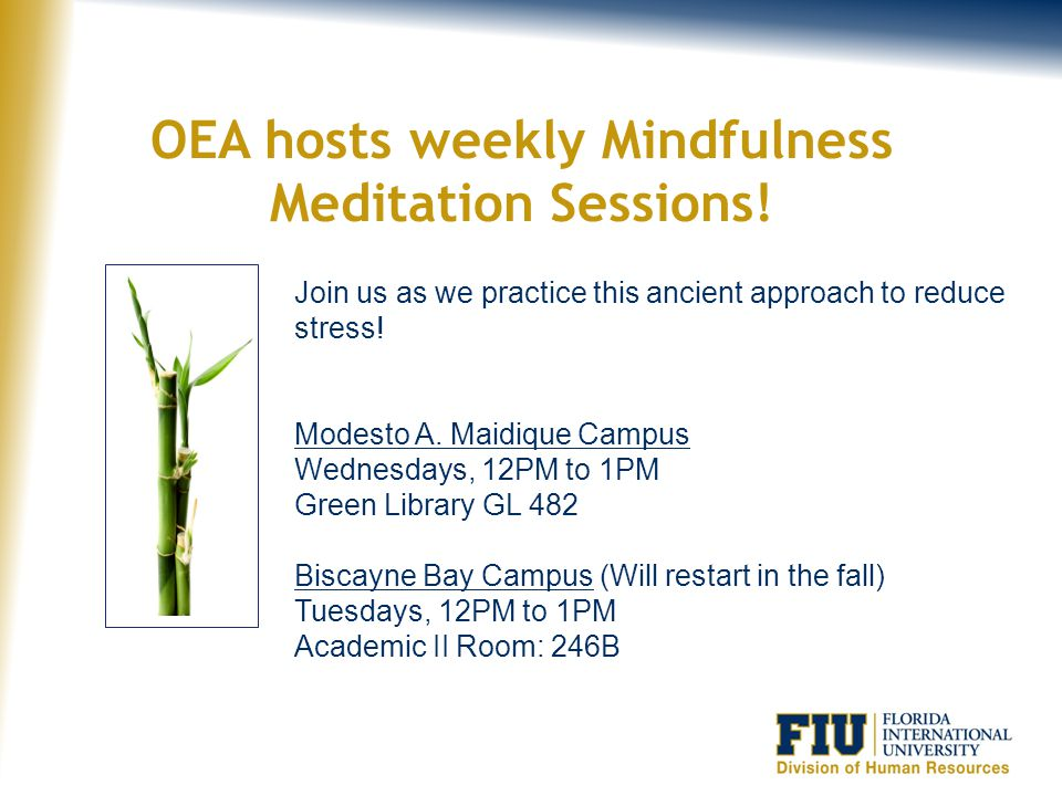 OEA hosts weekly Mindfulness Meditation Sessions!