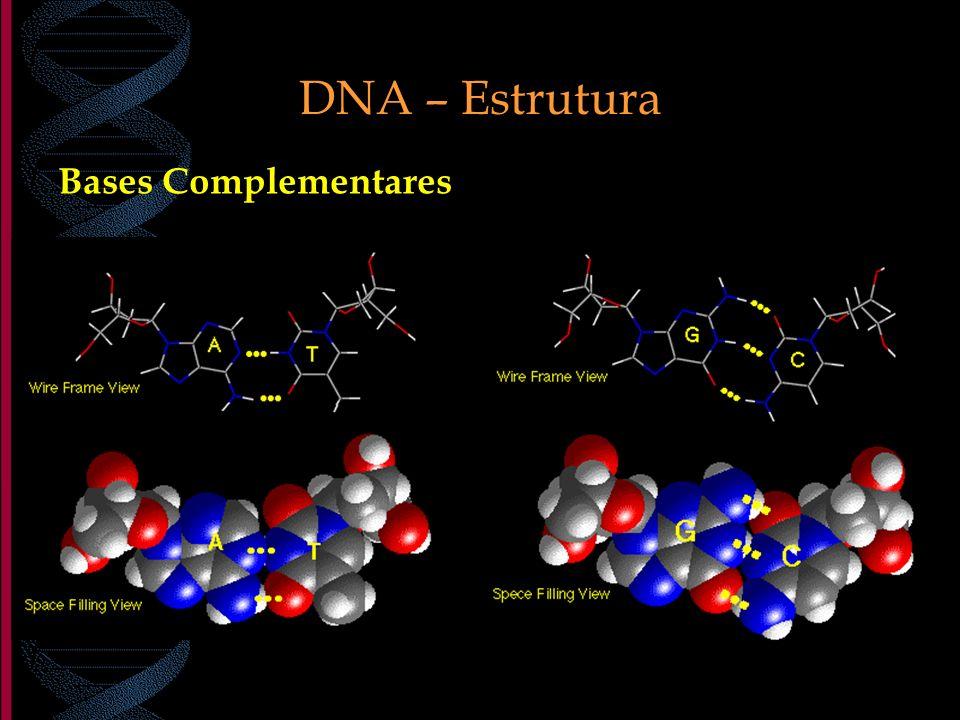 DNA – Estrutura Bases Complementares